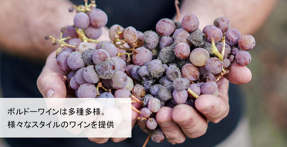 ボルドーワインは多種多様。様々なスタイルのワインを提供。