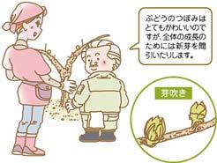 LESSON#001 ぶどう畑の1年