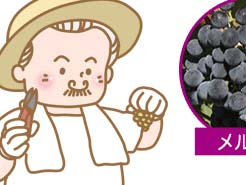 LESSON#007  ワイン生産量上位5ヵ国のぶどう品種ランキング