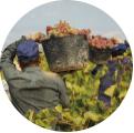 社会への貢献:地域と生産者
