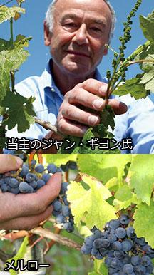 〝当主のジャン・ギヨン氏/ぶどう品種:メルロー