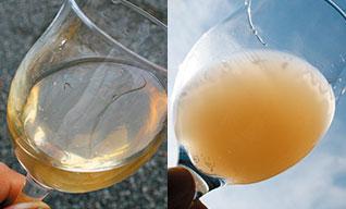 4.搾った果汁はタンクで一晩寝かせて不純物を沈殿させます。左は上澄み。右が10日目の果汁。