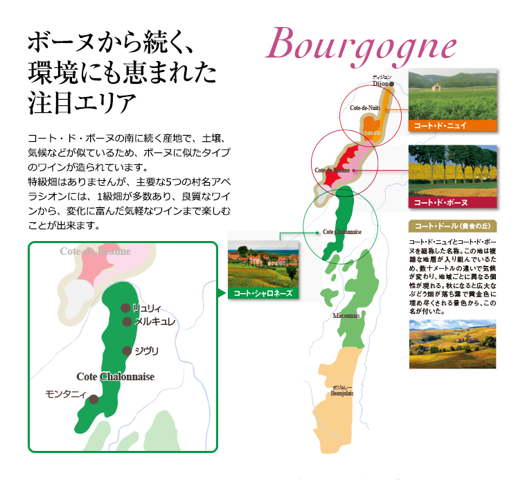 ボーヌから続く、環境にも恵まれた注目エリアコート・ド・ボーヌの南に続く産地で、土壌、気候などが似ているため、ボーヌに似たタイプのワインが造られています。特級畑はありませんが、主要な5つの村名アペラシオンには、1級畑が多数あり、良質なワインから、変化に富んだ気軽なワインまで楽しむことが出来ます。