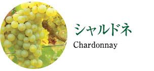 シャルドネ Chardonnay